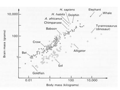 animals intelligence quotient and similar brain And mammals [1]), and in different orders of the same class (eg  animals with  larger brains are more intelligent than those  brain weight, encephalization  quotient and number of cortical neurons in selected mammals.